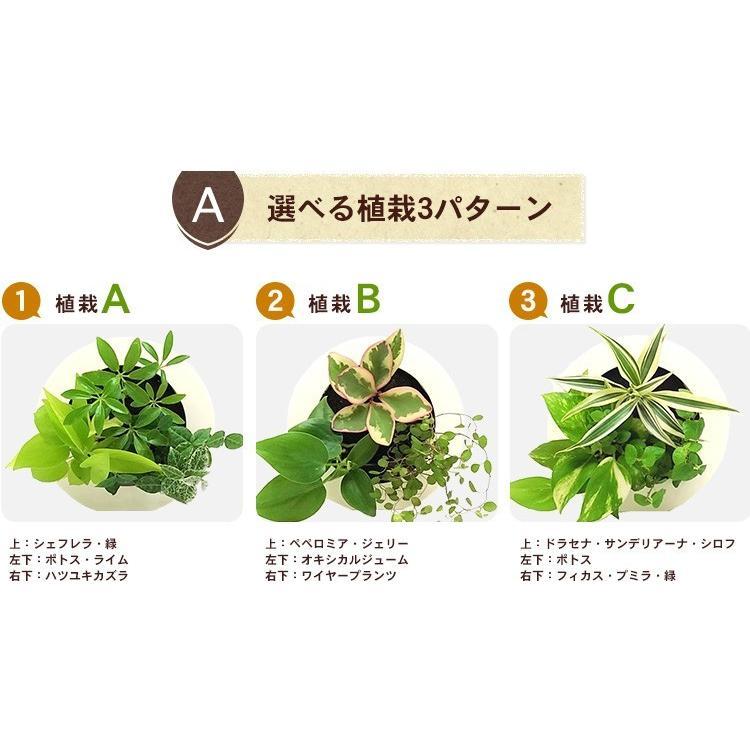 壁掛け観葉植物 ミドリエ デザイン 丸型 木目調グリーンフレーム|worldgarden|02