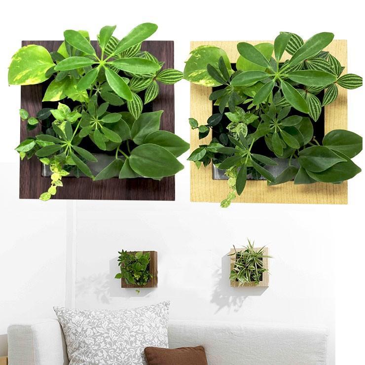 送料無料 壁掛け観葉植物 ミドリエ デザイン 「木目調フレーム 樹脂製」|worldgarden