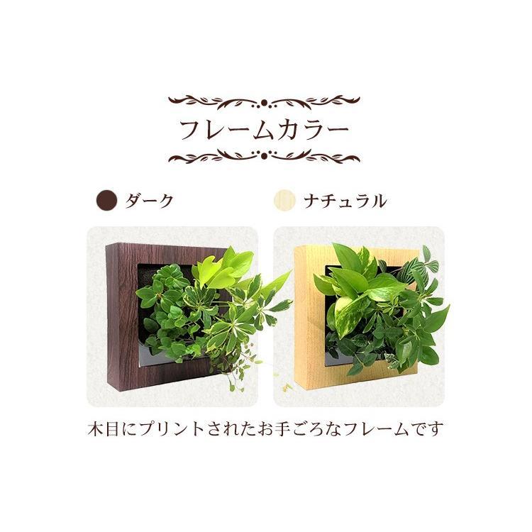 送料無料 壁掛け観葉植物 ミドリエ デザイン 「木目調フレーム 樹脂製」|worldgarden|06