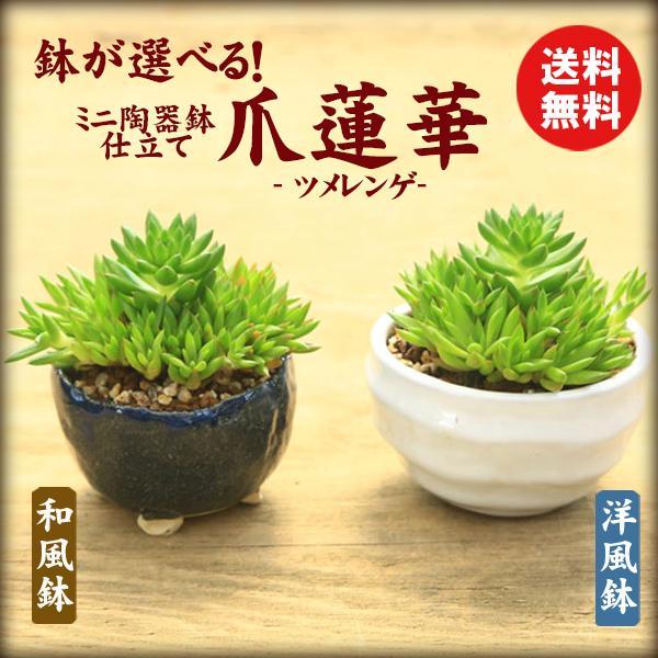 鉢が選べる 買い物 マーケット ミニ陶器鉢入り: 爪蓮華 鉢植え多肉植物和鉢相馬焼和風鉢洋風鉢bonsai ツメレンゲ