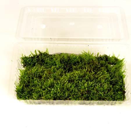 低価格化 盆栽用:はい苔 パック入り ハイゴケ 直営店