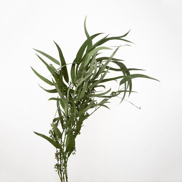 《 プリザーブドフラワー ついに入荷 》 即日出荷 大地農園 パウダーグリーン ブランド品 エキゾチカ ユーカリ 国産