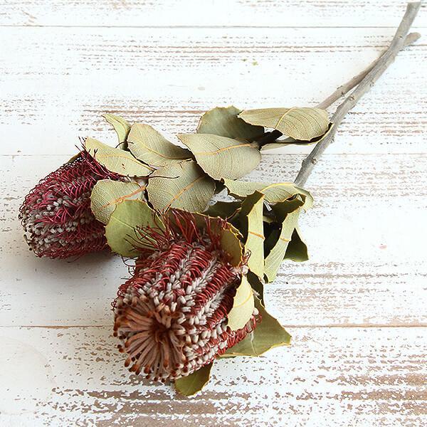 《 ドライフラワー 》 即日出荷 大地農園 バンクシャ 花材 ナチュラル 専門店 ワイルドフラワー 贈答品 スワッグ ブーケ ココシネア