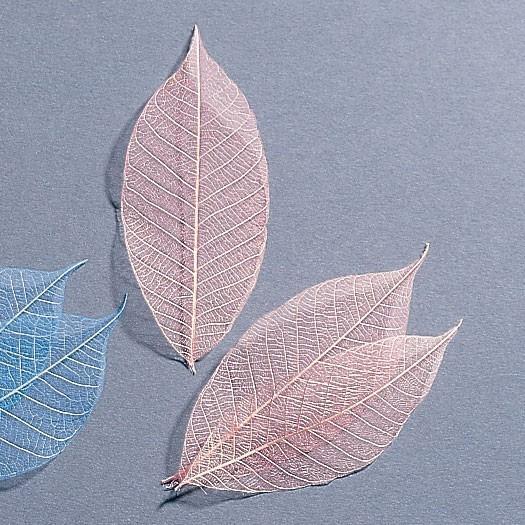 《 ドライフラワー 》 即日出荷 大地農園 特価 ミニスケルトンリーフ 大 ピンク 材料 アクセサリー材料 ナチュラル ドライ 自然素材 花材 葉脈 今季も再入荷 気質アップ インテリア