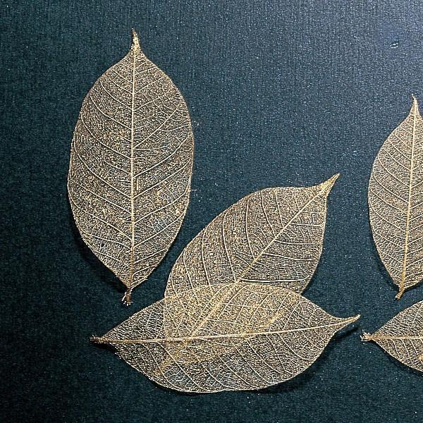 《 ドライフラワー 》 即日出荷 大地農園 ミニスケルトンリーフ 大 ゴールド 材料 特別セール品 インテリア ドライ 葉脈 自然素材 花材 ナチュラル アクセサリー材料 メーカー直売