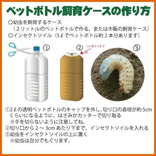 販売再開!国産滅菌済カブトムシ育成竹粉マット5L こばやしひろし名人のインセクトソイル  昆虫マット コバヤシ産業|yabulovewalker|02