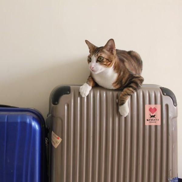 猫が好きですステッカー(ピンク)★玄関 携帯 タブレット スマホ ノートパソコンに貼って猫好きをアピール 3000円以上送料無料|yadotoneko|02