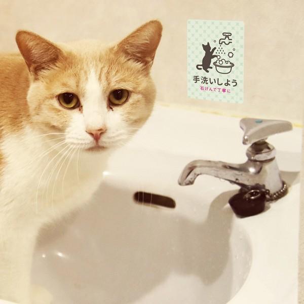 手洗いしようステッカー★手洗い 店舗 おしゃれ 扉 ドア 猫 ウイルス対策 新型コロナ 3000円以上送料無料|yadotoneko|02