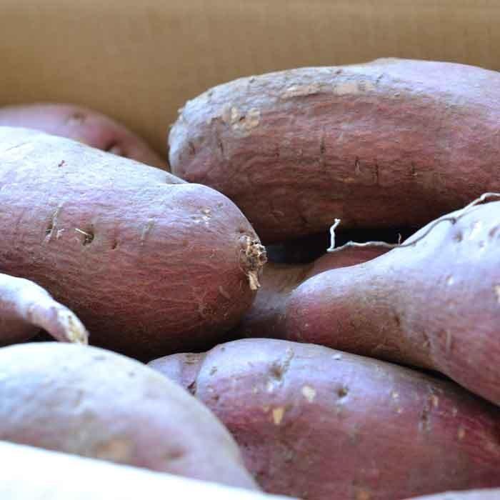 さつまいも 5kg 訳あり シルクスイート 茨城県産 さつま芋|yakiimo-adumaya|02