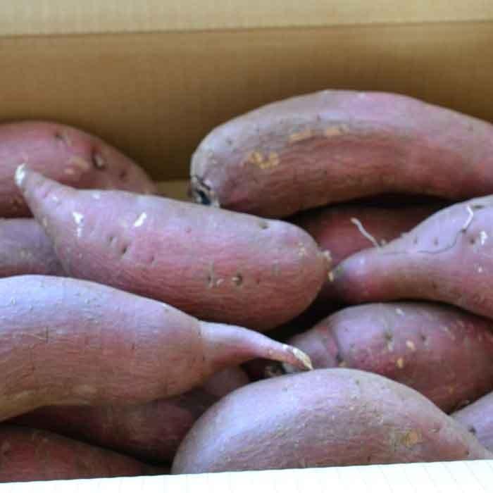 さつまいも 5kg 訳あり シルクスイート 茨城県産 さつま芋|yakiimo-adumaya|03