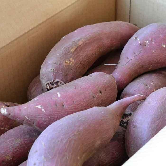 さつまいも 5kg 訳あり シルクスイート 茨城県産 さつま芋|yakiimo-adumaya|04