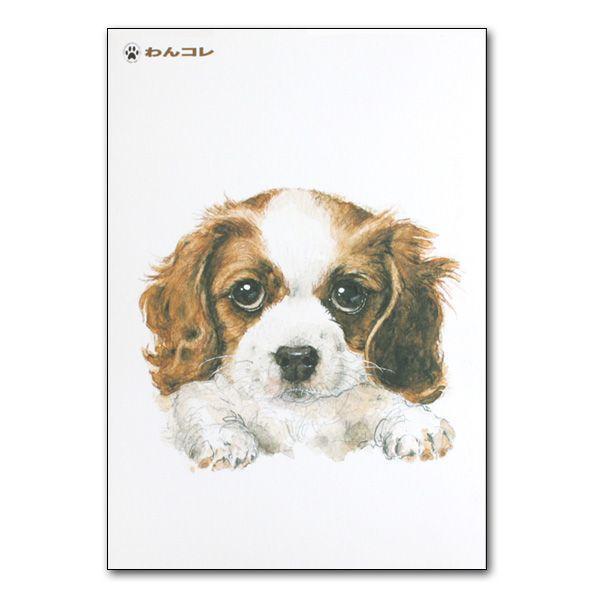 犬グッズ【わんコレ】・ポストカード・キャバリア[やきものらんど]