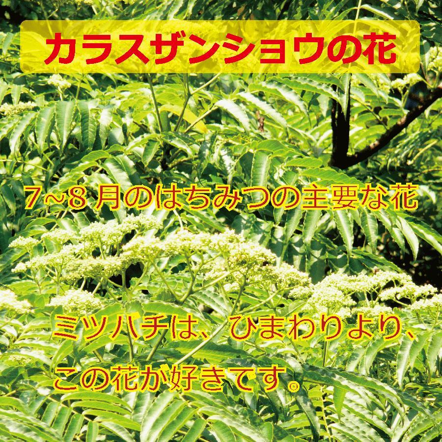 はちみつ・7〜8月の花・150g(千葉県富津市山中産) yamanaka-yoho 02