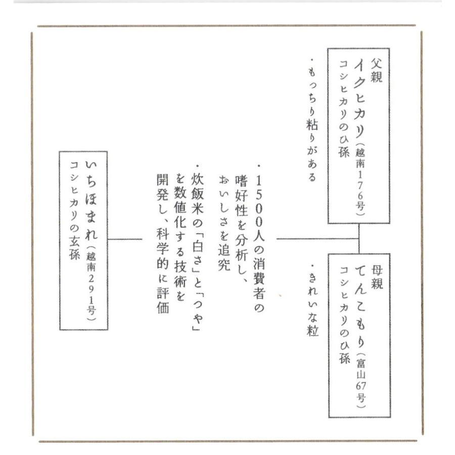 お米5kg  福井県産 いちほまれ 令和2年産 玄米5kg×1袋 選べる精米|yamasina|06
