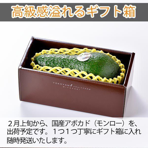 【10玉限定!】「モンロー(国産アボカド)大サイズ1玉」ギフト箱入り|yao800|02