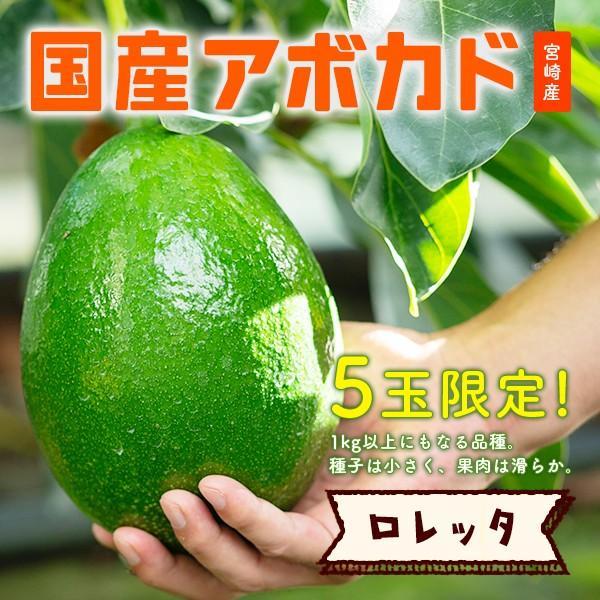 【5玉限定!】横山果樹園の「ロレッタ(国産アボカド)1玉」ギフト箱入り|yao800