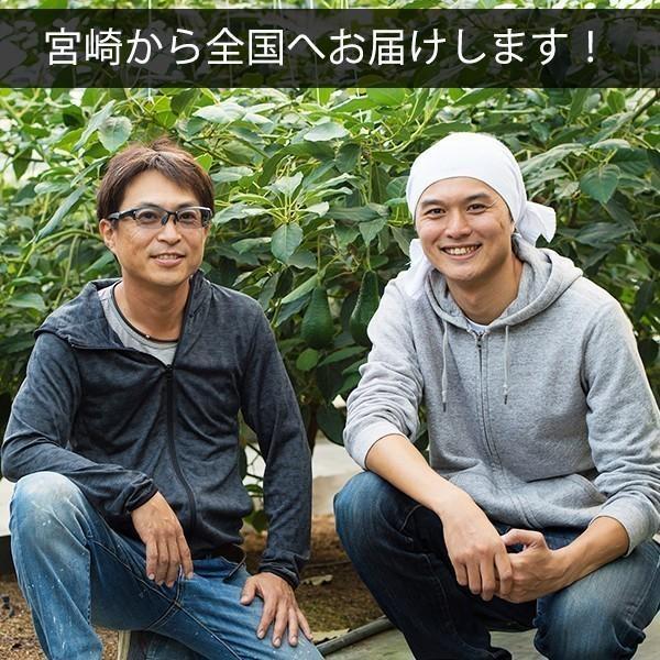 【5玉限定!】横山果樹園の「ロレッタ(国産アボカド)1玉」ギフト箱入り|yao800|04