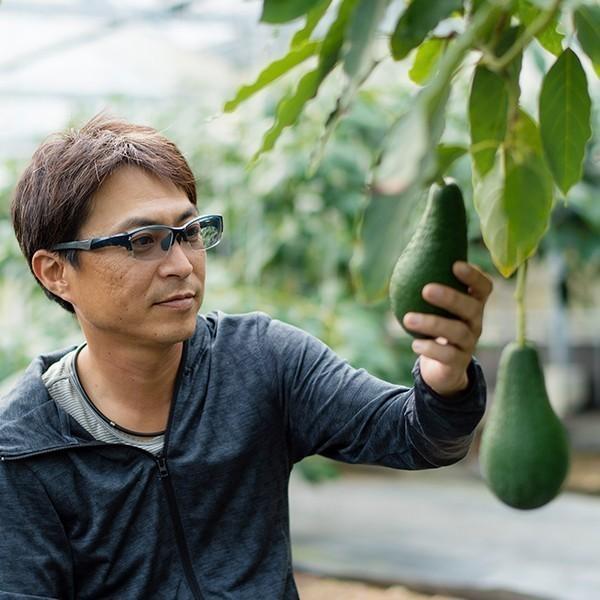 【5玉限定!】横山果樹園の「ロレッタ(国産アボカド)1玉」ギフト箱入り|yao800|07