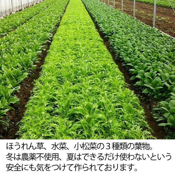 福じいさんの野菜【ほうれん草】宮崎県綾町産ほうれん草 150g*7袋|yao800|03