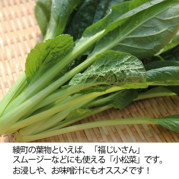 福じいさんの野菜【小松菜】宮崎県綾町産小松菜 150g*7袋 yao800 02