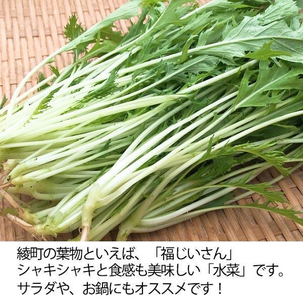 福じいさんの野菜【水菜】宮崎県綾町産水菜 150g*7袋|yao800|02