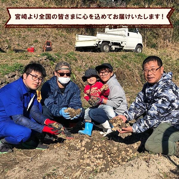 菊いも粉末【100g×5個セット】宮崎県産キクイモ100% yao800 06
