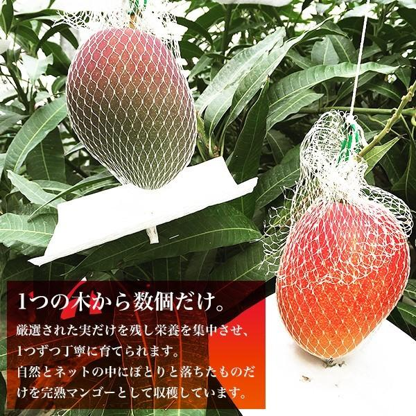 宮崎完熟マンゴー 2個セット 4Lサイズ ギフト プレゼント 贈答品 母の日、父の日 yao800 02
