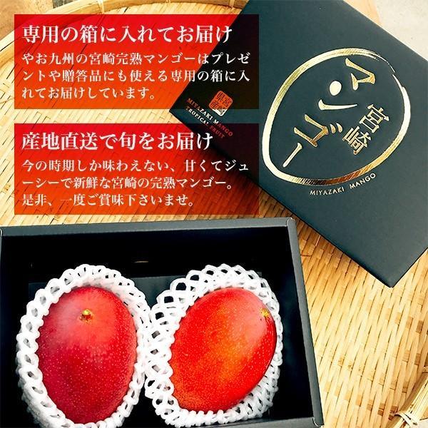 宮崎完熟マンゴー 2個セット 4Lサイズ ギフト プレゼント 贈答品 母の日、父の日 yao800 03