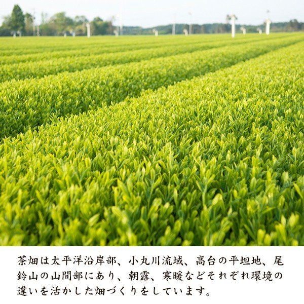 お茶農家「大塚園」のプレミアム緑茶【1パックx15包入】|yao800|03