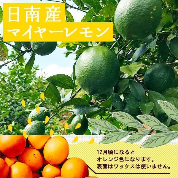 国産レモン【2kg】 日南産マイヤーレモン直径4cm以上 ※ノーワックス|yao800