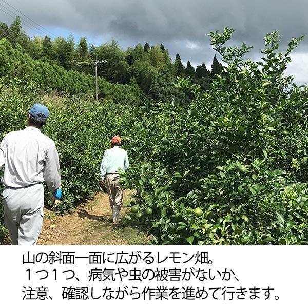 国産レモン【2kg】 日南産マイヤーレモン直径4cm以上 ※ノーワックス|yao800|03