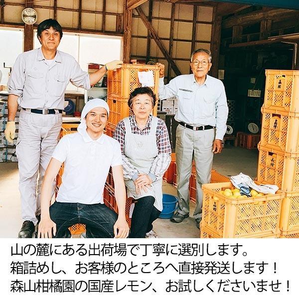国産レモン【2kg】 日南産マイヤーレモン直径4cm以上 ※ノーワックス|yao800|06
