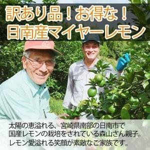 訳あり国産レモン【2kg】 日南産マイヤーレモン(サイズ混合) ※ノーワックス|yao800|02