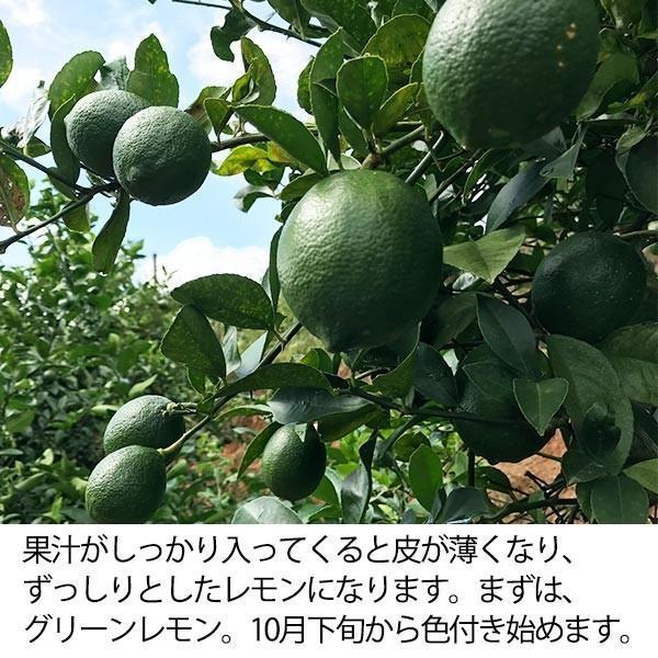 訳あり国産レモン【2kg】 日南産マイヤーレモン(サイズ混合) ※ノーワックス|yao800|04