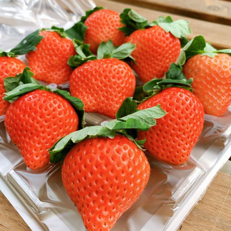 【イチゴの王様】おおきみDX(9玉サイズ)|yao800|02
