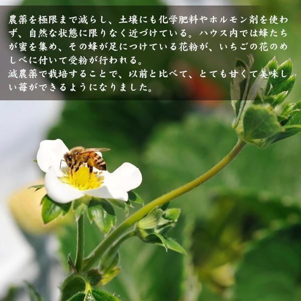 【イチゴの王様】おおきみDX(9玉サイズ)|yao800|03