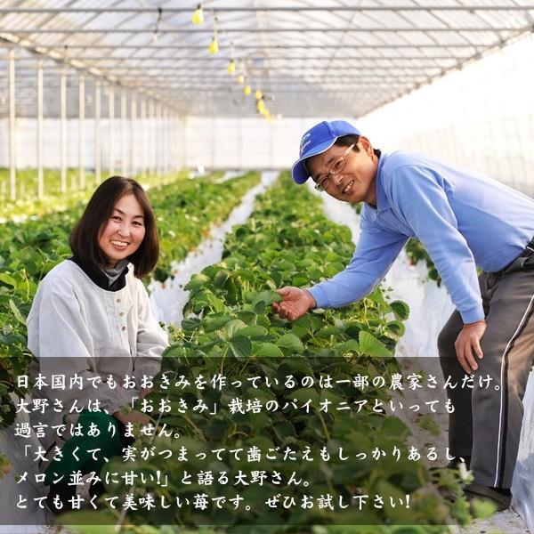 【イチゴの王様】おおきみDX(9玉サイズ)|yao800|04