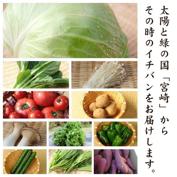 野菜セット やおパック 1回便 10種類と卵 送料無料 yao800 02