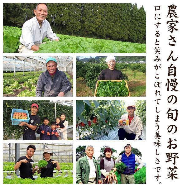 野菜セット やおパック 6回便 10種類 月1回お届け 送料無料|yao800|03