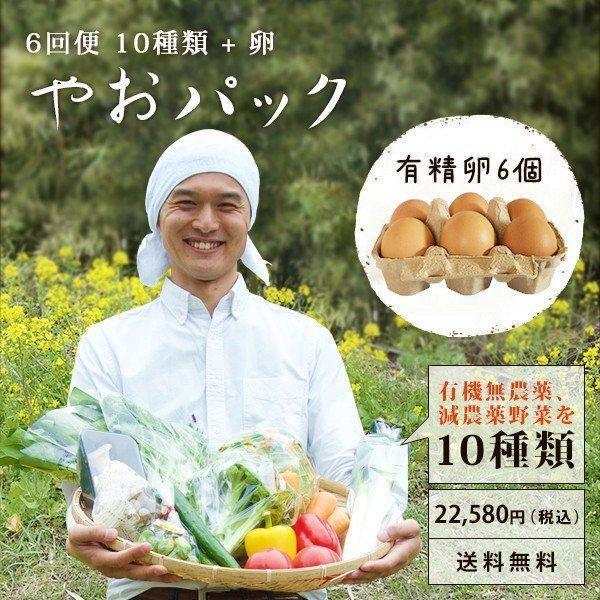 野菜セット やおパック 6回便 10種類と卵 月1回お届け 送料無料 yao800