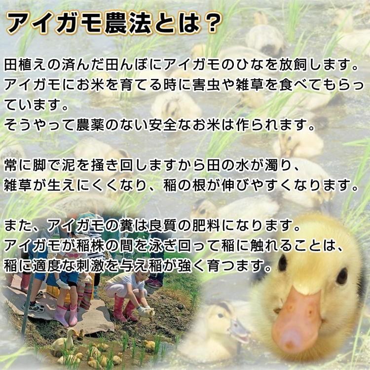会津 合鴨農法 コシヒカリ 10kg 白米 令和2年産 新米  福島 お米 あいがも 送料無料 無農薬|yappari|02