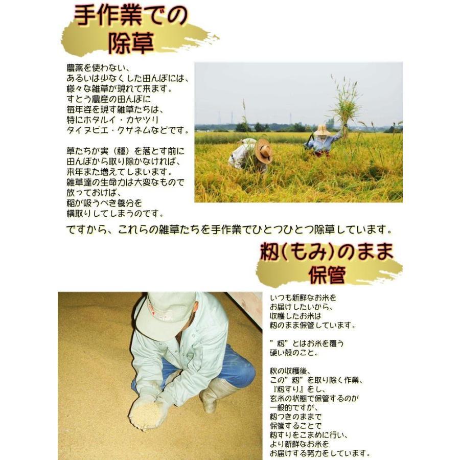 会津 合鴨農法 コシヒカリ 10kg 白米 令和2年産 新米  福島 お米 あいがも 送料無料 無農薬|yappari|05