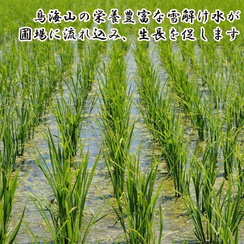 新米 令和2年産 ひとめぼれ 玄米 5kg 特別栽培米 山形県産 庄内産 農家直送 米 お米|yogorou|08
