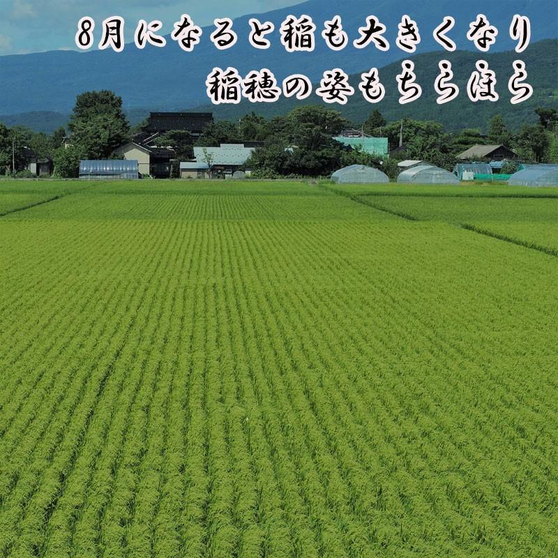 新米 令和2年産 ひとめぼれ 玄米 5kg 特別栽培米 山形県産 庄内産 農家直送 米 お米|yogorou|09