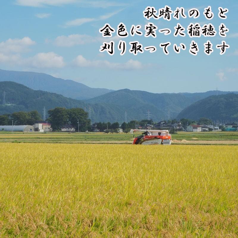 新米 令和2年産 ひとめぼれ 玄米 5kg 特別栽培米 山形県産 庄内産 農家直送 米 お米|yogorou|10