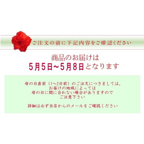 母の日 ギフト プレゼント ピンク カーネーション  バンビーノ バルーンピックつき 送料無料|yonezawaengei|03