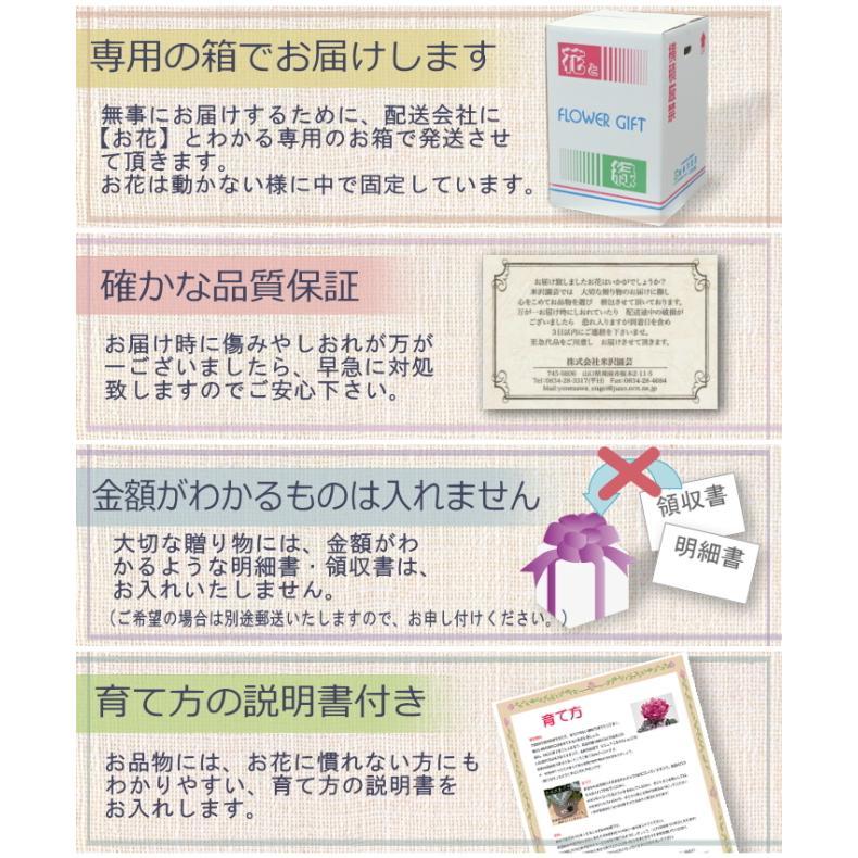 母の日 ギフト プレゼント ピンク カーネーション  バンビーノ バルーンピックつき 送料無料|yonezawaengei|04