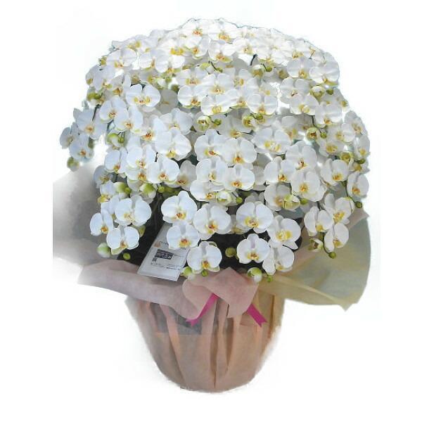 【光触媒】【造花】胡蝶蘭 大輪 白 20本立ち 送料無料