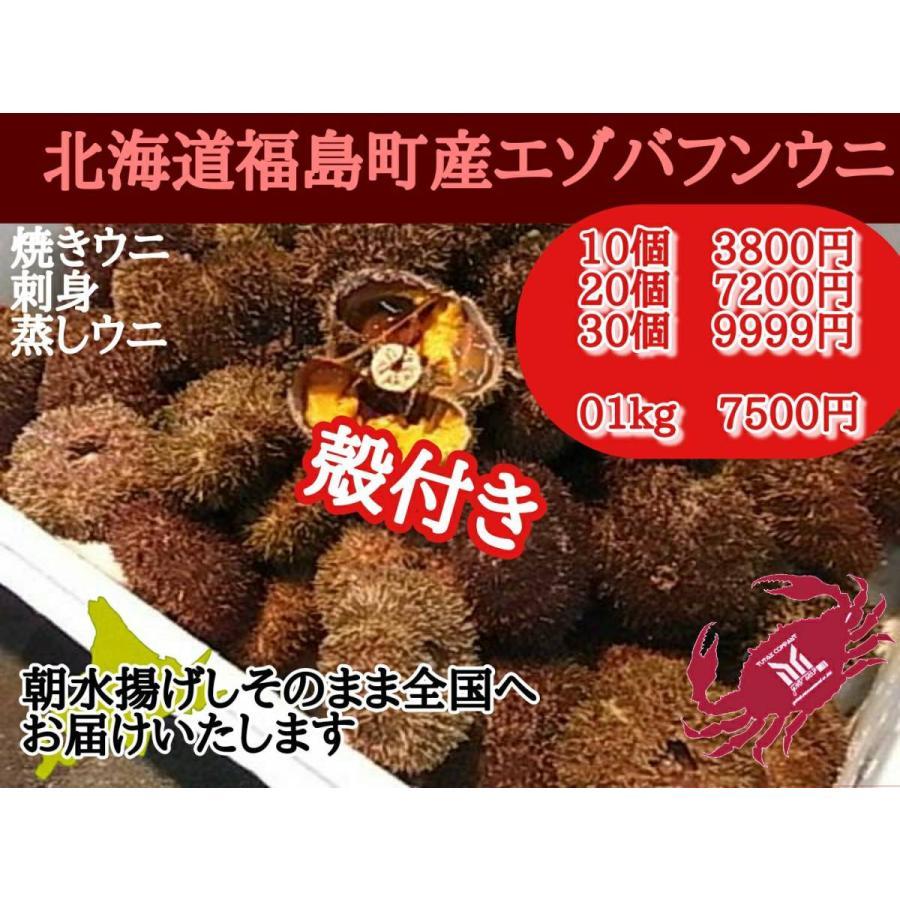 北海道福島町産 殻付き バフンウニ 10個|yutax-group