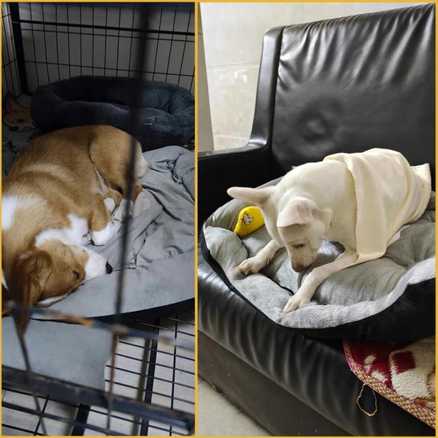 ペット ベッド 大型犬用 中型犬 サイズ選べる ペットゲージ 洗濯 ペットベッド L ブラウン 黒 ブラック z-fashion 02